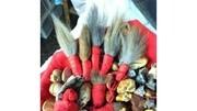 世界上最會打洞的動物,一邊用爪子打洞,一邊用鱗甲裝土!