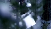 CCTV音樂《經典》系列節目:動物世界片頭曲
