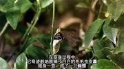 《金曲撈》最新一期20170602薛之謙《動物世界》現場版開場