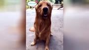 夏天狗狗的天才犬測試