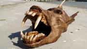 十大海洋深處最恐怖的怪異生物,巨型魷魚竟然只排名第八!