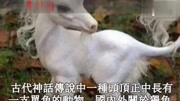 中國古代實力超強的三個神獸,出場自帶bgm,吼聲震耳欲聾,厲害呀