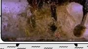 斗破蒼穹2來襲:3月12日上映,蕭炎卷土重來再戰魂殿救藥老