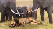 動物世界學習樂園