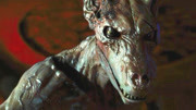 目前已知,世界上现存最大的一只蛇,美洲虎和凯门鳄才能与其一战