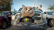 奇怪的貓:無家可歸的貓,太可憐了
