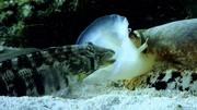 世界上最毒的五大動物,看到就要小心了#冷知識