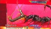 蜈蚣在返回巢穴的路上遇到了蟒蛇,真正的蟒蛇干蜈蚣!