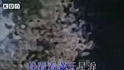 """奧地利:熊貓龍鳳胎""""福伴""""""""福鳳""""首次亮相"""