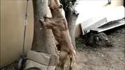 山東90后女孩,在老家創業養殖猛犬,每天要照顧訓練幾百只獵犬