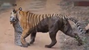 GMOD恐龙大战非洲巨蟒