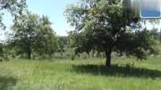 農村失傳上千年的捕野山雞絕技,重現江湖