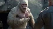 巨石强森《狂暴巨兽》的票房 再次靠内地影迷的钱包来拯救