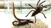 在野外不小心被蜈蚣咬了怎么辦?記住這幾點,野外生存更得心應手