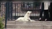 《小狗奶瓶》创作特辑 揭秘主创背后的故事