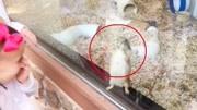 如何捕捉一只仓鼠!