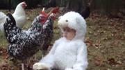 山里的公鸡可真厉害 不依不饶啄个不停