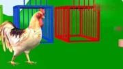 趣味 學習:學習動物的名稱和顏色 母雞 豬