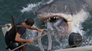 宝宝巴士 大白鲨原来是来求救的