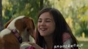 《一条狗的使命2》正式预告片释出