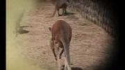 碰碰狐之動物兒歌 第7集 找尾巴