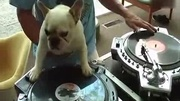 DJ MEN  DJ DOG_标清