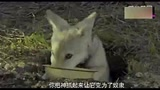 《狼圖騰》電影高清馮紹峰精彩電影提前看