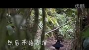 動物兄弟,和極樂鳥學習跳舞