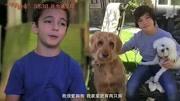 《一条狗的使命2》洛杉矶首映