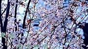 【配乐版】诗朗诵 一棵开花的树 作者席慕容 朗诵者唐可_标清
