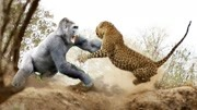 羊也玩極限運動,動物世界的絕世武功,最后一個天下無敵!