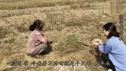 农村小伙种植100亩冬瓜,亩产2万斤,看他1亩能赚万博体育官网登录网页版苹果钱