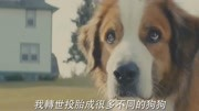 这只狗看哭了全球10亿人!解读电影《一条狗的使命》!