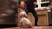 Training Harry's pet,Charlie,to dance.