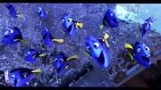 海底总动员来袭