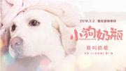 公益彩立方平台登录《小狗奶瓶》花絮曝光 微行动援的狗狗们