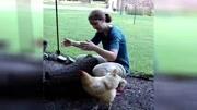 狗狗粘人的感覺好溫暖!動物跟人一樣,誰對他好,他就粘誰
