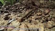 小蛇斗蜈蚣:花380金幣購買的蜘蛛精,竟然能夠變身