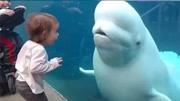 你听到过白鲸的叫声吗?像小孩一样有没有?