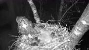 3只鬣狗圍攻一只蜜獾,掏后門的碰見不要命的,誰更強悍?