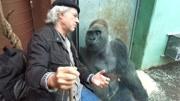 盘点自然界最强壮的八种动物,银背大猩猩排第四