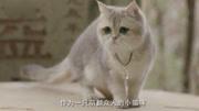 又一甜寵穿越網劇《我在大理寺當寵物》正式定檔!