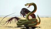 越南巨人蜈蚣黄脚型开箱视频