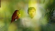诗歌朗诵  《苹果树下》作者闻捷 朗诵:张泉灵、鞠萍