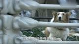 媽祖:看到籠子里只有一只狗,海怪們還以為嘉應變成了一條狗