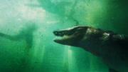 《奪命三頭鯊》強悍大叔小片刀取鯊魚頭