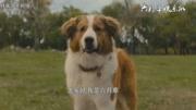 刘宪华一条狗的使命2洛杉矶首映问答环节现场粉丝高清