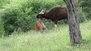 小朋友參觀動物世界樂園,有恐龍有長頸鹿