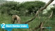 世界7个最危险的动物!当地最恐怖的杀手!