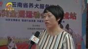 """萌寵""""上陣"""":寵物冰雪運動會萌翻康平臥龍湖"""